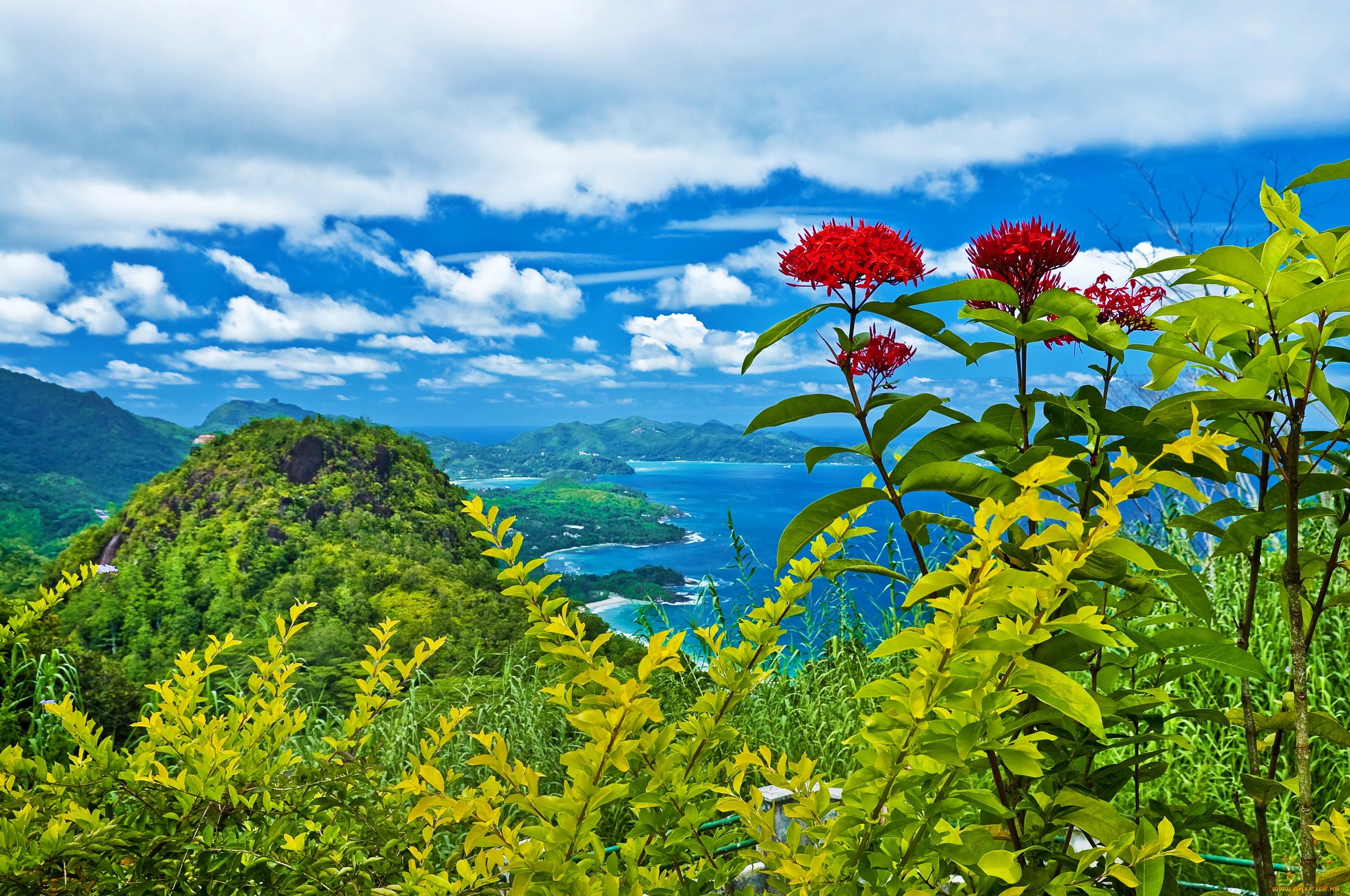 картинки пейзажи с красивой природой и цветами дерево